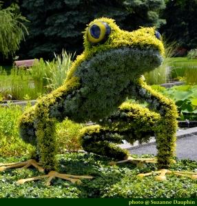 l'allégorie de la grenouille